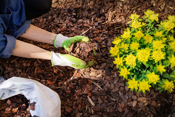 Is Organic Mulch Better for Your Trees?